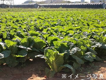 小林市×野菜/法人【0520】-2