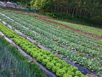 からさわ農園-1
