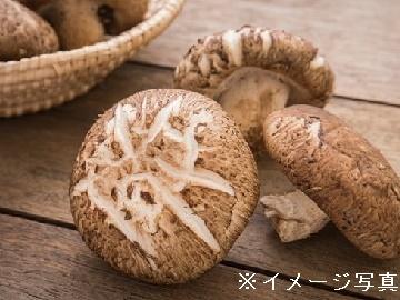 高岡市×野菜/法人【0473】-1