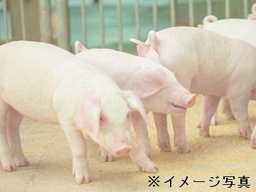 株式会社東総子豚センター-2