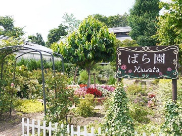 河田ばら園-2