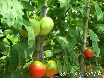 豊橋市×農業資材営業/法人【4003】-1