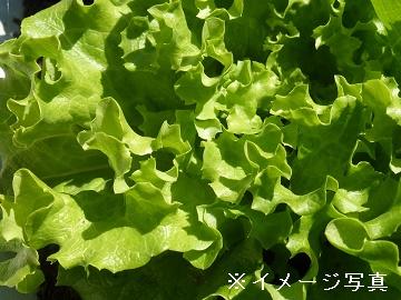 雲仙市×露地野菜/個人【0411】-1