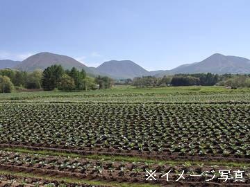 雲仙市×露地野菜/個人【0411】-2