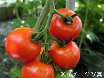 豊橋市・田原市×野菜営業/法人【0415】-2