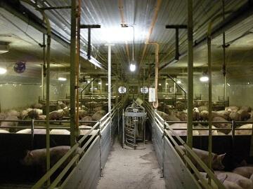 有限会社中多寄農場-3