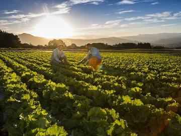 全国×農業資材営業/法人【0367】