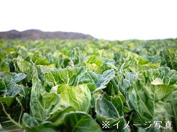 佐久市×野菜/法人【0397】-2(2)