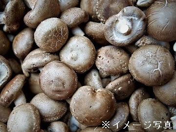高崎市×野菜/法人【0369】-2