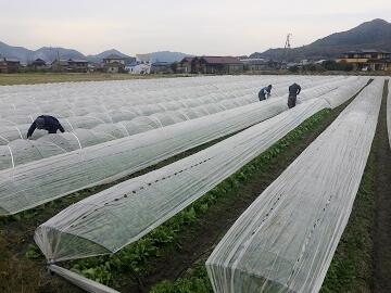 三豊市×野菜/法人【0343】-1