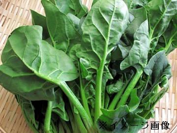 山陽小野田市×野菜/法人【0396】-2