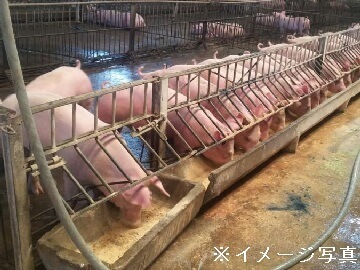 桐生市×養豚法人【0330】-1