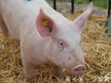 桐生市×養豚法人【0330】-2