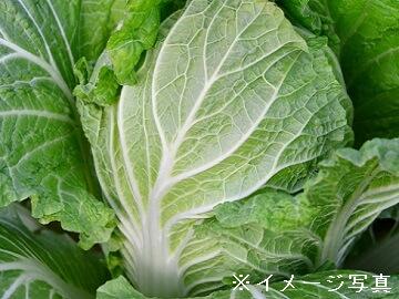 小諸市×野菜/法人【0356】-2