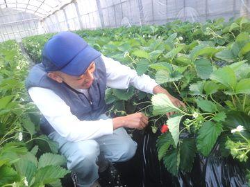 SweetDiary株式会社-2