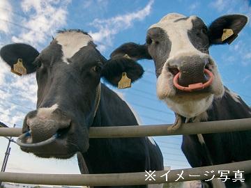 香取市×酪農/法人【0339】-1