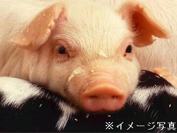 前橋市×養豚/法人【0316】-2