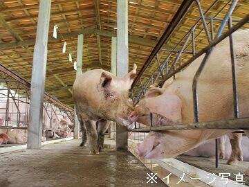 矢板市×養豚/法人【0285】-1