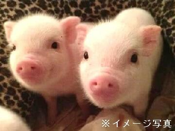 栃木県矢板市×養豚/法人【0285】