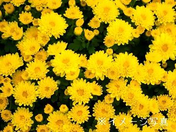 田川市×花卉/個人【0287】-1