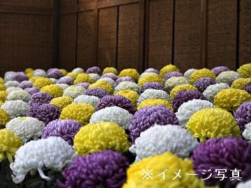 田川市×花卉/個人【0287】-2