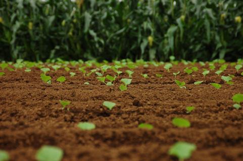 農業の要 土を考える