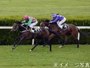 浦河町×競走馬/法人【0264】-1