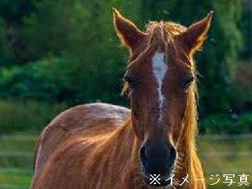 浦河町×競走馬/法人【0264】-2