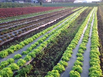 内田農園(北本市)-6