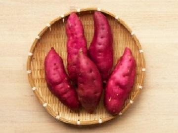 あわら市×野菜/法人【2291】-2