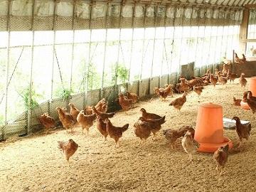 有限会社ハピー農場-7