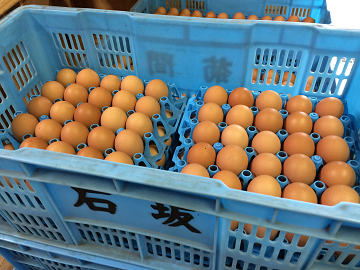 有限会社石坂養鶏-5