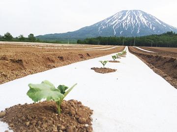 株式会社八百一の郷 北海道農場-1