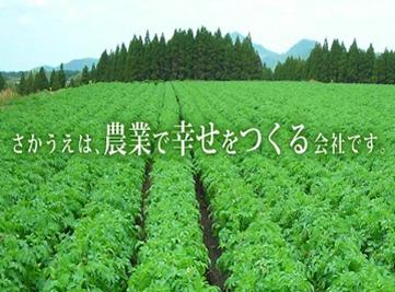 sakaue_top