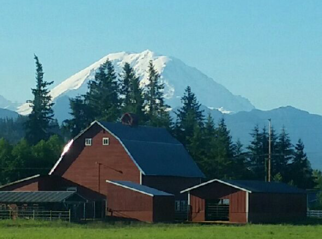 Mt Rainier Back Drop
