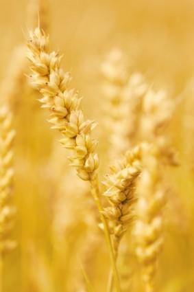 食農と地産地消のススメ