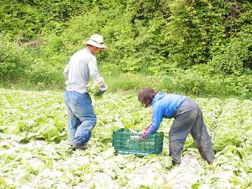 veg farmせき-2
