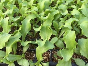 veg farmせき-1