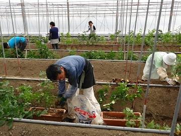 海陽町×花・野菜/法人【34102】-3