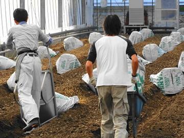 海陽町×花・野菜/法人【34102】-2