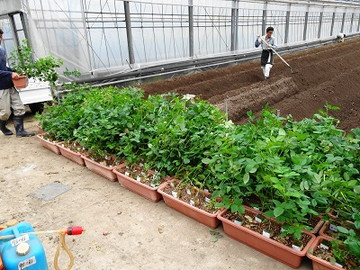 海陽町×花・野菜/法人【34102】-1