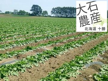 有限会社大石農産-5