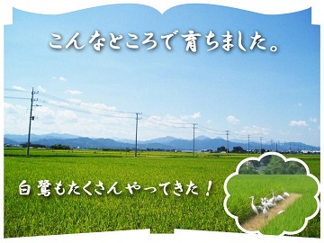 高橋農園(本庄市)-4