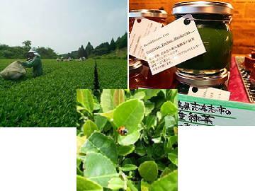 株式会社東八重製茶-6