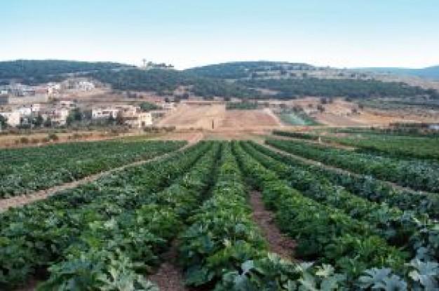 農業の人不足はIT化で解消