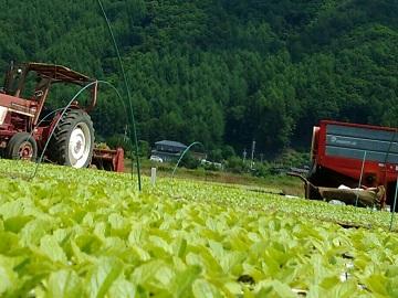 川上村×露地野菜/個人【2994】-1