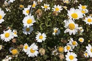 働き方によって環境はいろいろ!農業で花を扱う花農家