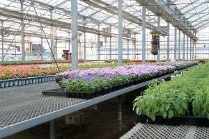 花農家を始めよう!耕作と土壌消毒のポイント
