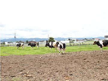 島根県×酪農/個人【6133】-2