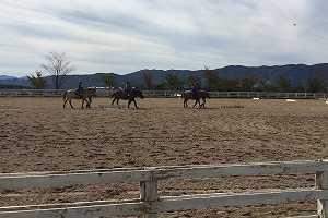 馬に関わる仕事について知りたい